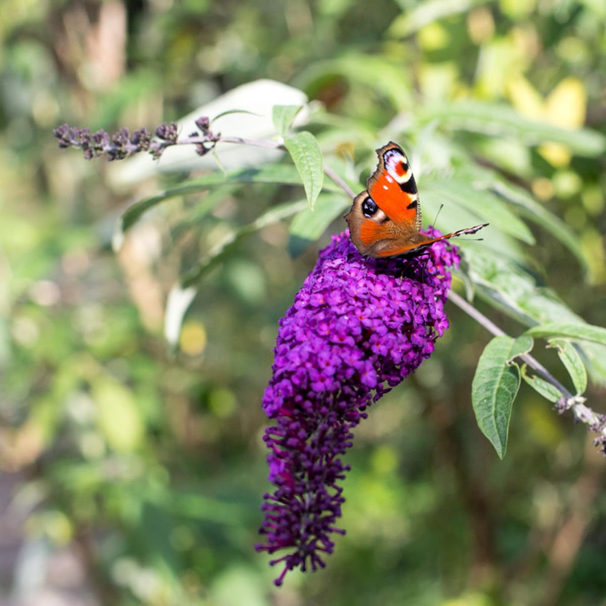 Ferienwohnungen Naturzeit Schmetterling