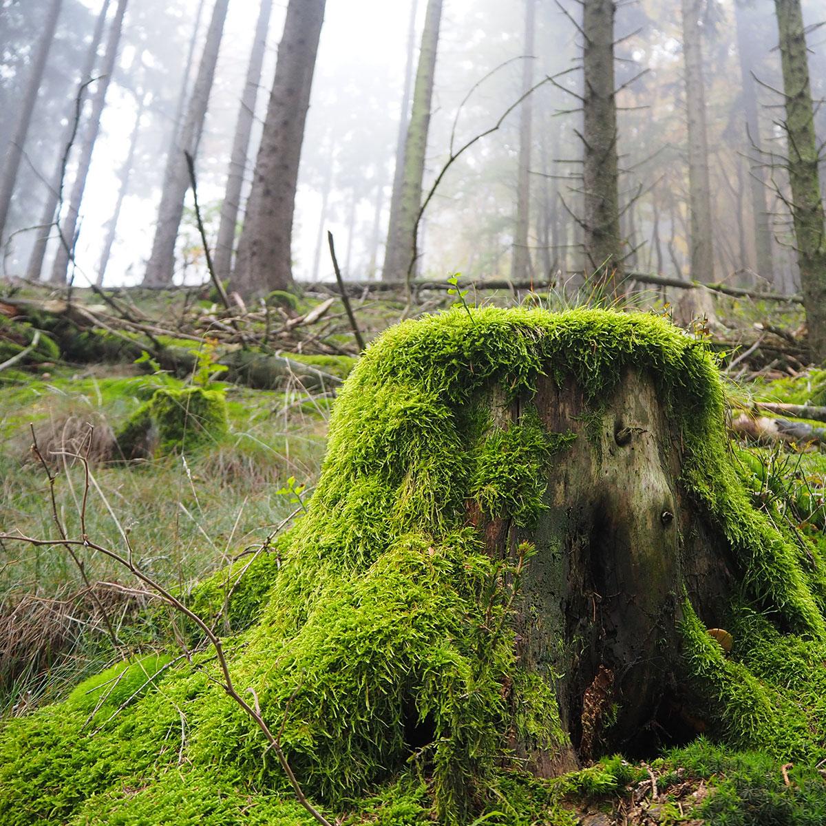 Ferienwohnungen Naturzeit Wald
